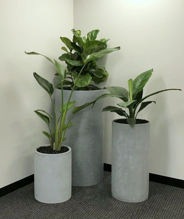 Characteristics of cement pots for plants