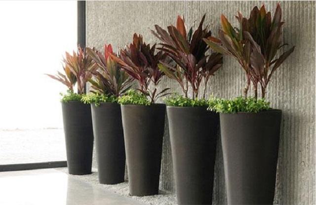 How to choose a good pot planter?