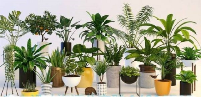 How to take care of plant pots?